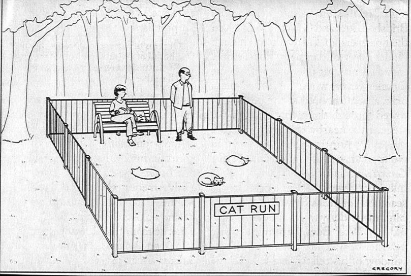 cat-run